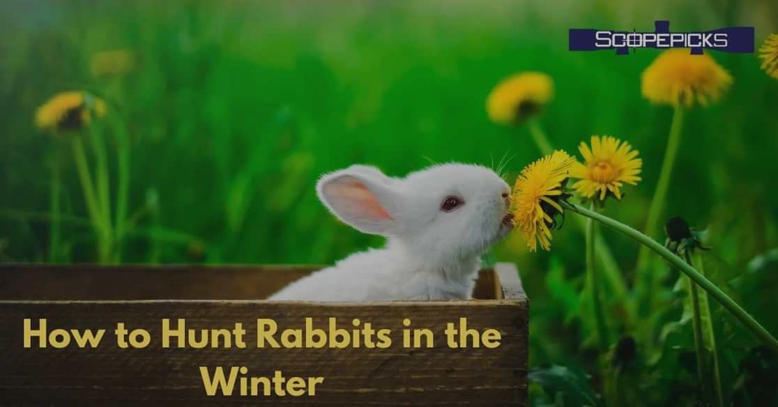 winter rabbit hunting